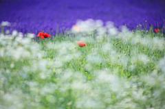 花のココロ