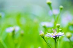 青い花とセセリちゃん