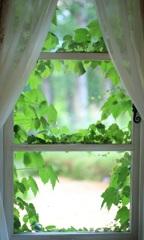 窓~風のガーデン~