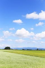 青空と蕎麦畑