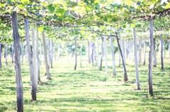 六月の果樹園