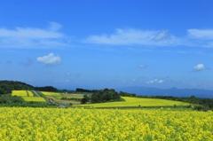 黄色い大地