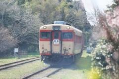 ほんのり春 ~いすみ鉄道~