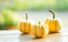 pumpkin一家