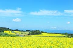 黄色い大地とみずいろの空