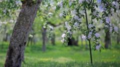 林檎の花咲く頃