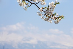 雪国に春が来て