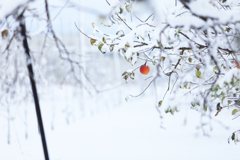 雪のりんご畑