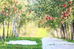 林檎のアーチ