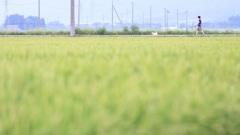田んぼde散歩♪