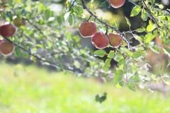 りんごしずくちゃん
