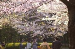 桜のある風景~佳き日に~