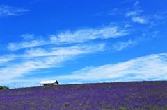 青い花咲く丘