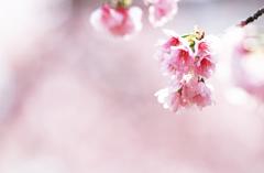 小さな桜ブーケ♪