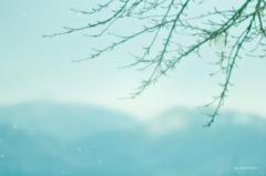 sakura drops♪