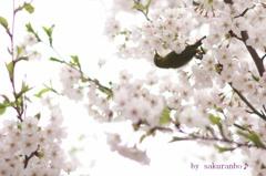 Lovin' you♪~桜&メジロ編~