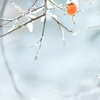 柿の雪ぼうし