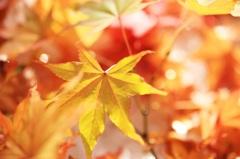 雪の中の秋色