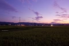 晩夏~揺れる稲穂~