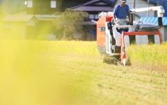 稲を刈る男