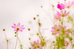 風に揺れる花びら模様