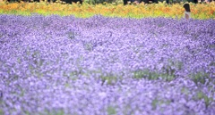 淡彩の花畑と少女