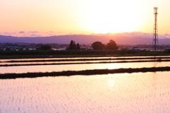 桜色の田園詩