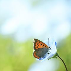 青い花のラブソング♪