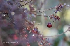 冬のクランベリー