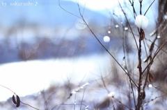 雪のしずく