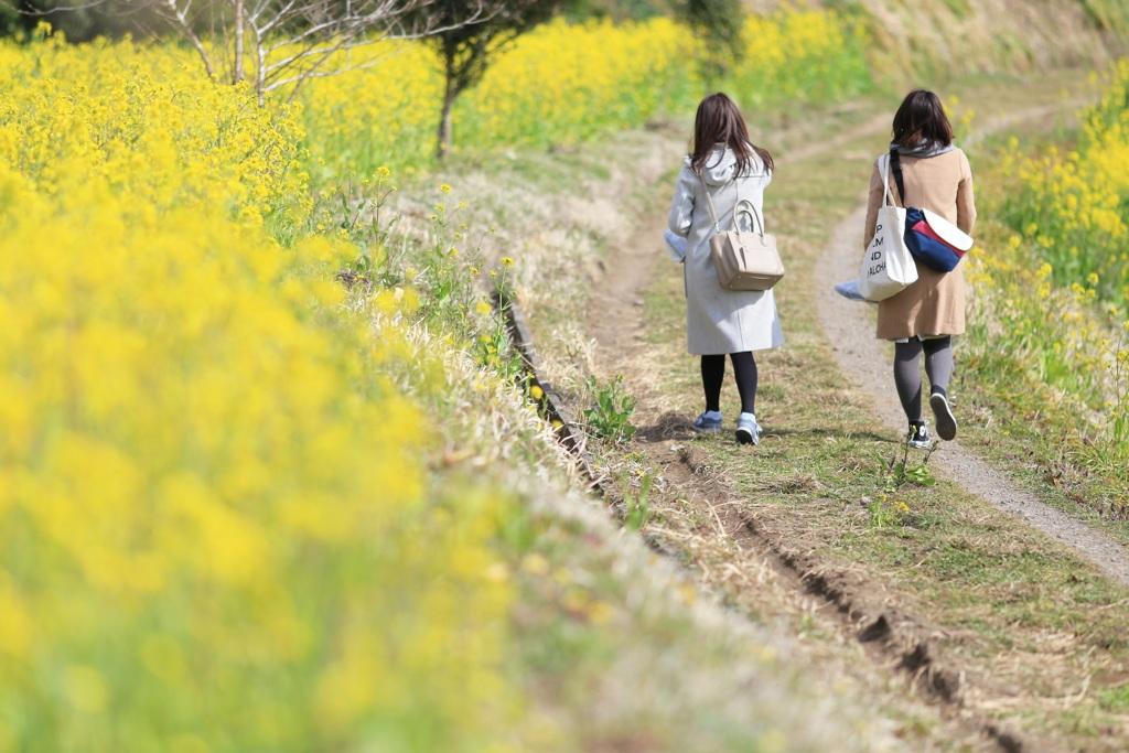 春色散歩♪