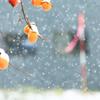 柿の雪ぼうし ~大雪編~
