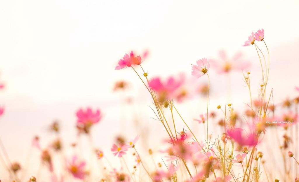 春の 風 を 待つ あの 花 の よう に 歌詞 勿忘/Awesome City Club/春の風を待つあの花のように/☻/花束みたいな恋をした