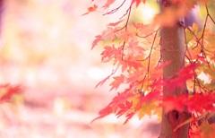 秋彩のしらべ