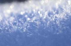 氷 の 森