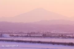 桜色に染まる鳥海山