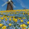 オランダ風