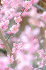 春らしい色