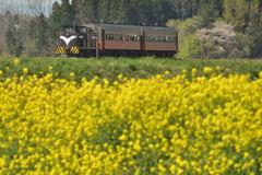 春の津軽鉄道  1