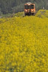 春の津軽鉄道  2
