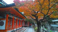 耕三寺の紅葉