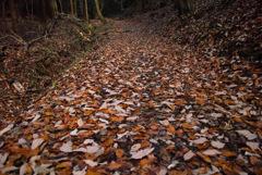 枯葉散り 積もる山道