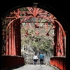 帝釈の短いトンネルを抜けると桜橋であった
