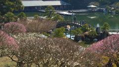 早春の三景園