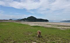 ウサギの楽園~大久野島
