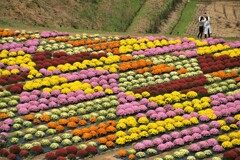 花のパッチワーク 2