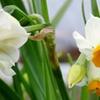 寒空に 耐え凛と咲く 和水仙