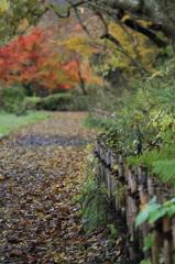 竹垣の小路