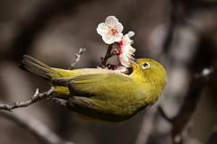 みんなの野鳥図鑑 #28