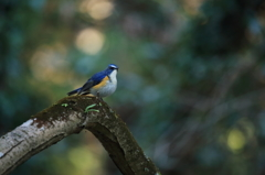 青い鳥の幸せ、その実体(2)